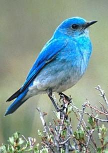 Vermont songbird